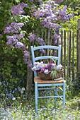 Syringa vulgaris 'Katharine Havemeyer' (common lilac)