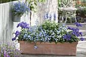 Terracottakasten in blau-lila bepflanzt