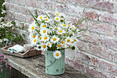 Rural bouquet of Leucanthemum vulgare (marguerite)