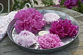 Paeonia (peony) blossoms with floating candle in the water
