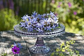 Wreath of campanula (bellflower) on cake plate with foot