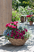 Basket bowl with Petunia Sweetunia 'Suzie Storm' (petunia), Dahlia