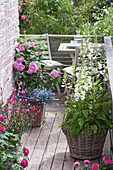 Small balcony with pink (rose), digitalis (thimble), Lobelia