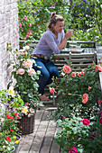 Small rose balcony with sitting area, Rose, diascia