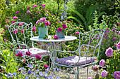 Seating in the rose garden between flowering beds
