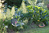 Mixed culture in the hillside, tuber fennel (Foeniculum vulgare)