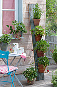 Gardening vertically saves space
