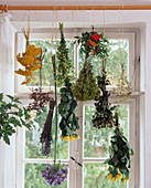 Hang plants upside down to dry