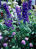 Support for perennials
