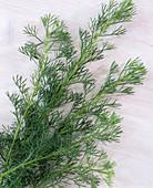 Artemisia abrotanum (wormwood)