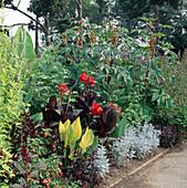 Ricinus 'Sanguineus', Canna, Jacaranda mimosifolia, Iresine lindenii