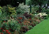Beet in Rot mit Acer 'Senkaki' / Ahorn (gelb), Juniperus / Wacholder, Hydrangea 'Annabel' / Hortensie