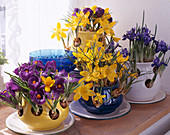 Crocus pots with Crocus vernus and Iris reticulata (Netziris)
