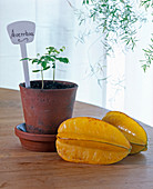 Sowing exotic fruits