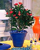 Preventive plant protection