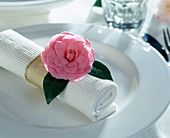 Napkin Decoration with Camellia japonica (Camellia)