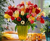 Tulipa 'Color Parade' (mix)