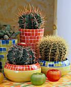 Cacti in a hybrid culture