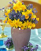 Narcissus hybrids, Muscari armeniacum (Grape Hyacinth)