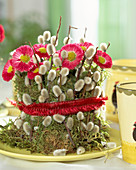 Bellis perennis, pot of moss and pussy willow