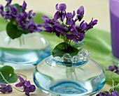 Viola odorata (fragrance violet)