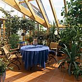 Frementodendron CALIFORNICA, ACCA Sellowiana,