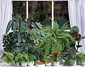 Grünpflanzenfenster
