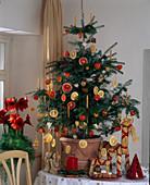 Abies koreana (Koreatanne) als lebendiger Weihnachtsbaum