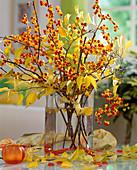 Celastrus orbiculatus (Tree Warbler)