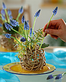 Willow ball with muscari and acacia