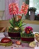Easter decoration with Hyacinthus (hyacinth) and Primula