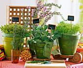Kitchen herbs, thymus, rosmarinus, salvia