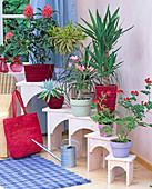 Flower benches, Jacobina, Dracaena, Agave, Beaucarnea
