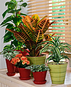 Protect plants at the window from the blazing sun