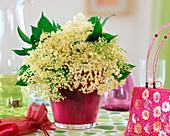 Elderflowers (Sambucus nigra) bouquet
