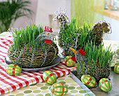 Wire hens with wheatgrass