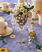 Primula acaulis (primrose) in wineglass with bird sand