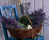 Basket with cut lavender flowers