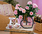 Pink chinensis (potted roses)