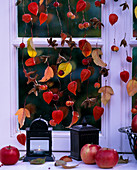 Window decoration Pysalis lantern flower, Malus ornamental apples and apples, Fagus fruit stalks