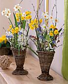 Narcissus 'Geranium' and 'Grand Soleil D'Or', Muscari armeniacum