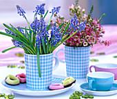 Muscari armeniacum (grape hyacinth), chamelaucium