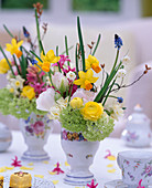 Narcissus 'Jetfire' and 'Bridal Crown' (narcissus), ranunculus