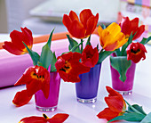 Tulipa 'Red Paradise' and 'Flair' tulips in pink and purple glasses