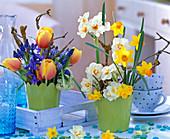 Narcissus 'Bridal Crown', 'Jetfire' and 'Tete A Tete' (Daffodil)
