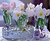 Tulipa 'Angelique' (tulip) in glasses on white tin tray