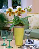 Paphiopedilum (Lady's Slipper Orchid)