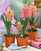 Hyacinthus 'Gipsy Queen' and 'Fondant' (orange and salmon pink)
