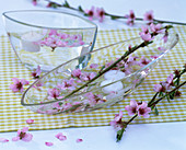 Prunus persica (peach) flowers in the water with floating candles