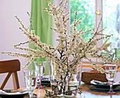 Prunus spinosa (sloe branches in glass vase)